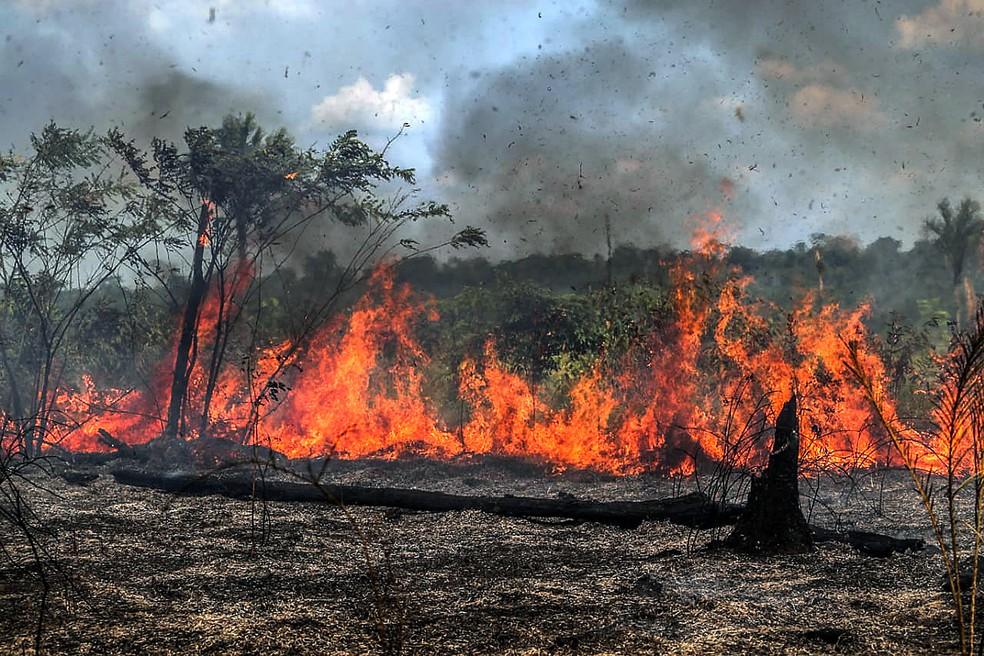 O que o desmatamento na Amazônia pode desencadear?